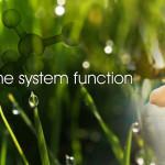 Richway Amethyst Biomat -  Improves immune system function